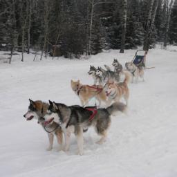 thumbnail_dogs_snow-800x800-1-600x600